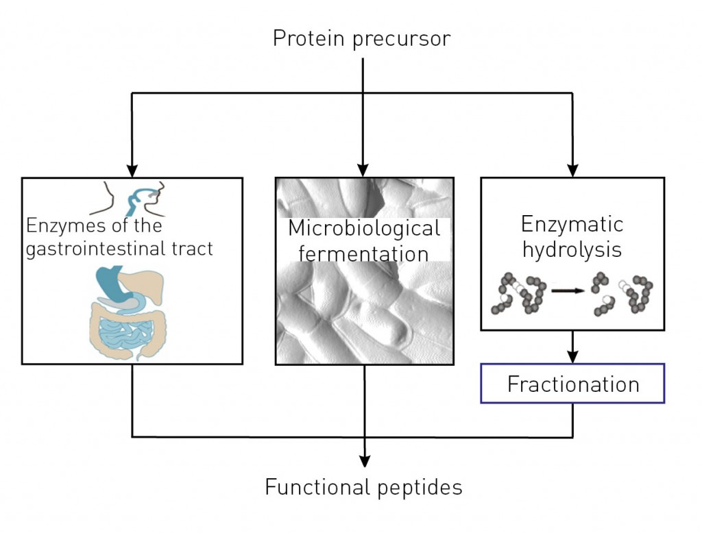 Fractionation of functional peptides with ion-exchange