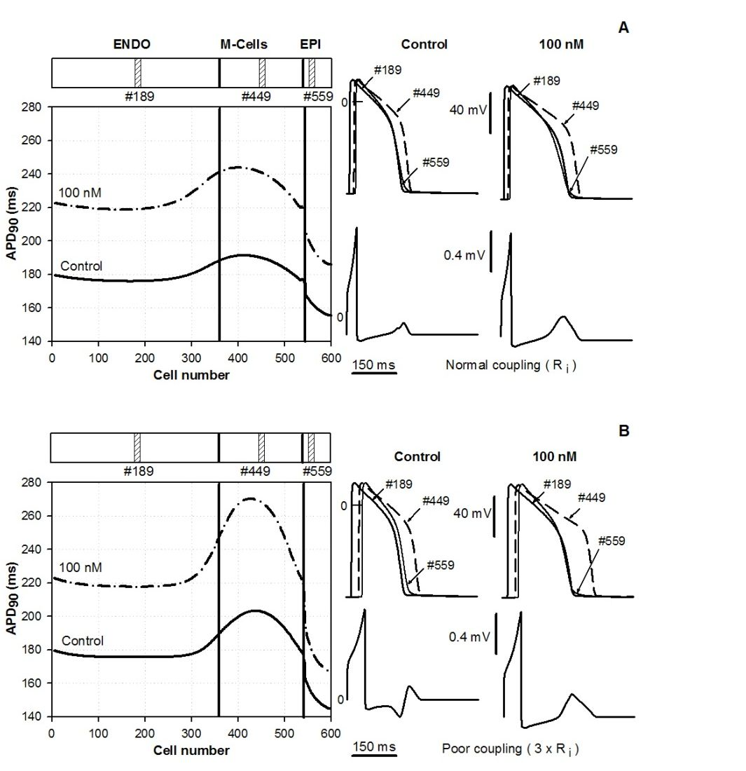 Multiscale Modeling Of Myocardial Electrical Activity