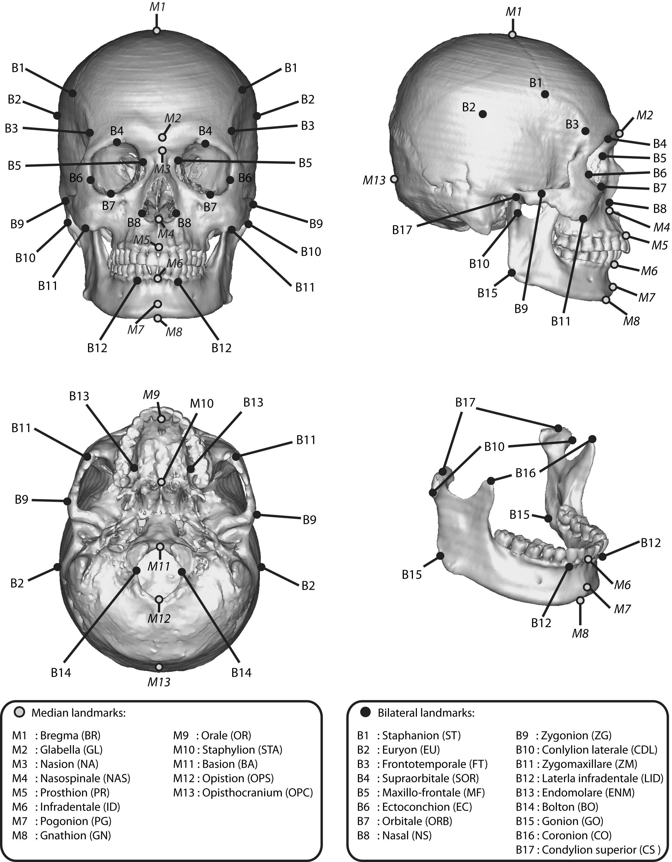 Anatomy Mcgraw Hill Worksheet