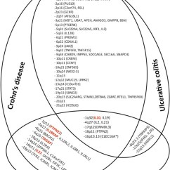 Venn Diagram Type 1 And 2 Diabetes 2001 Dodge Trailer Wiring Comparative Genetic Analysis Of Inflammatory Figure Known Susceptibility Loci That Are Shared By Crohn S Disease Ulcerative Colitis