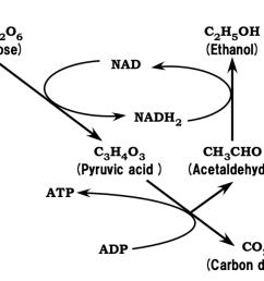 figure 5 ethanolic fermentation metabolism chart [ 1088 x 794 Pixel ]