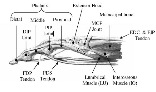 design and control of an emg driven ipmc based artificial muscle