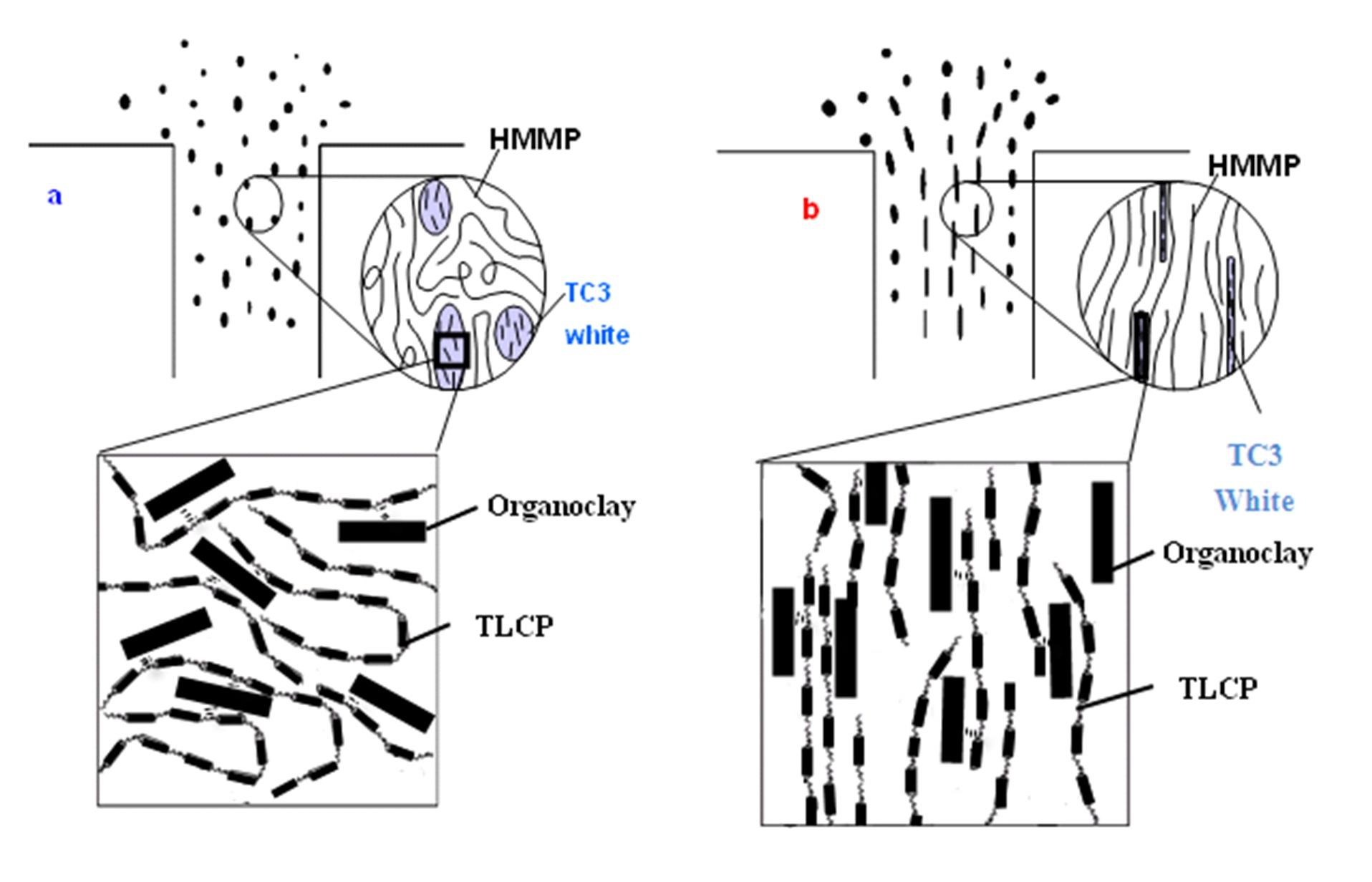 Micro-Rheological Study on Fully Exfoliated Organoclay