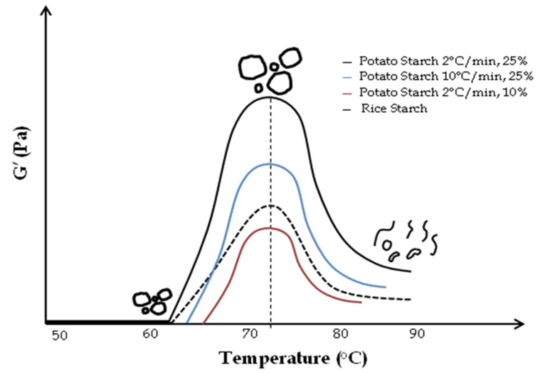 Viscoelastic Properties of Starch and Non-Starch