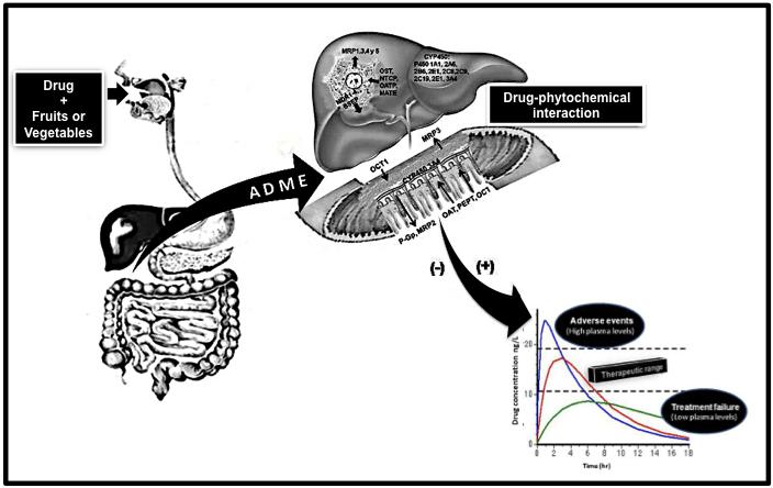 Fruit/Vegetable-Drug Interactions: Effects on Drug