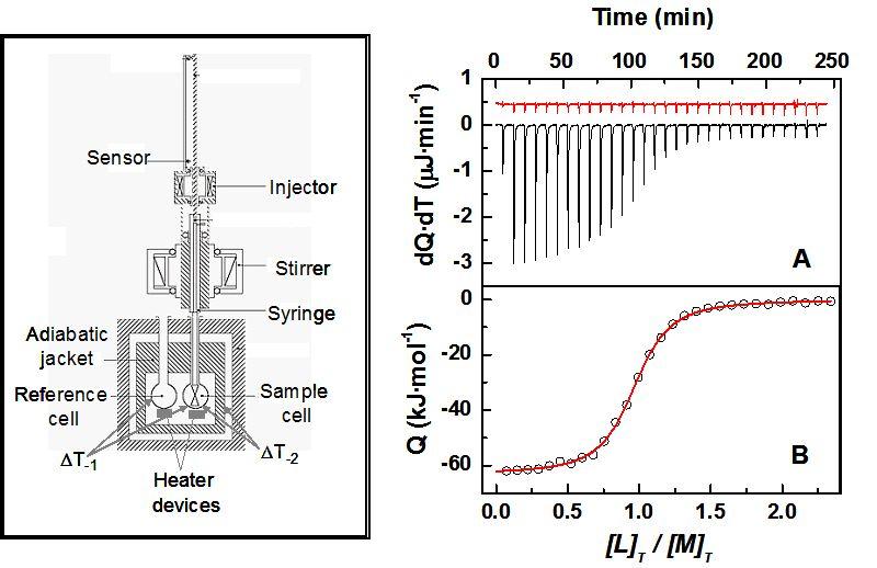 Isothermal Titration Calorimetry: Thermodynamic Analysis