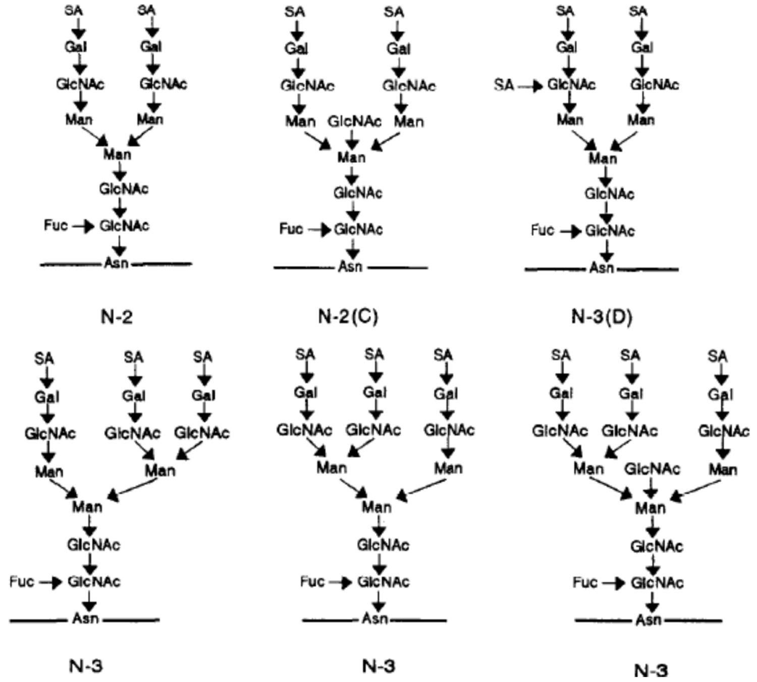 Structural and Functional Roles of FSH and LH as