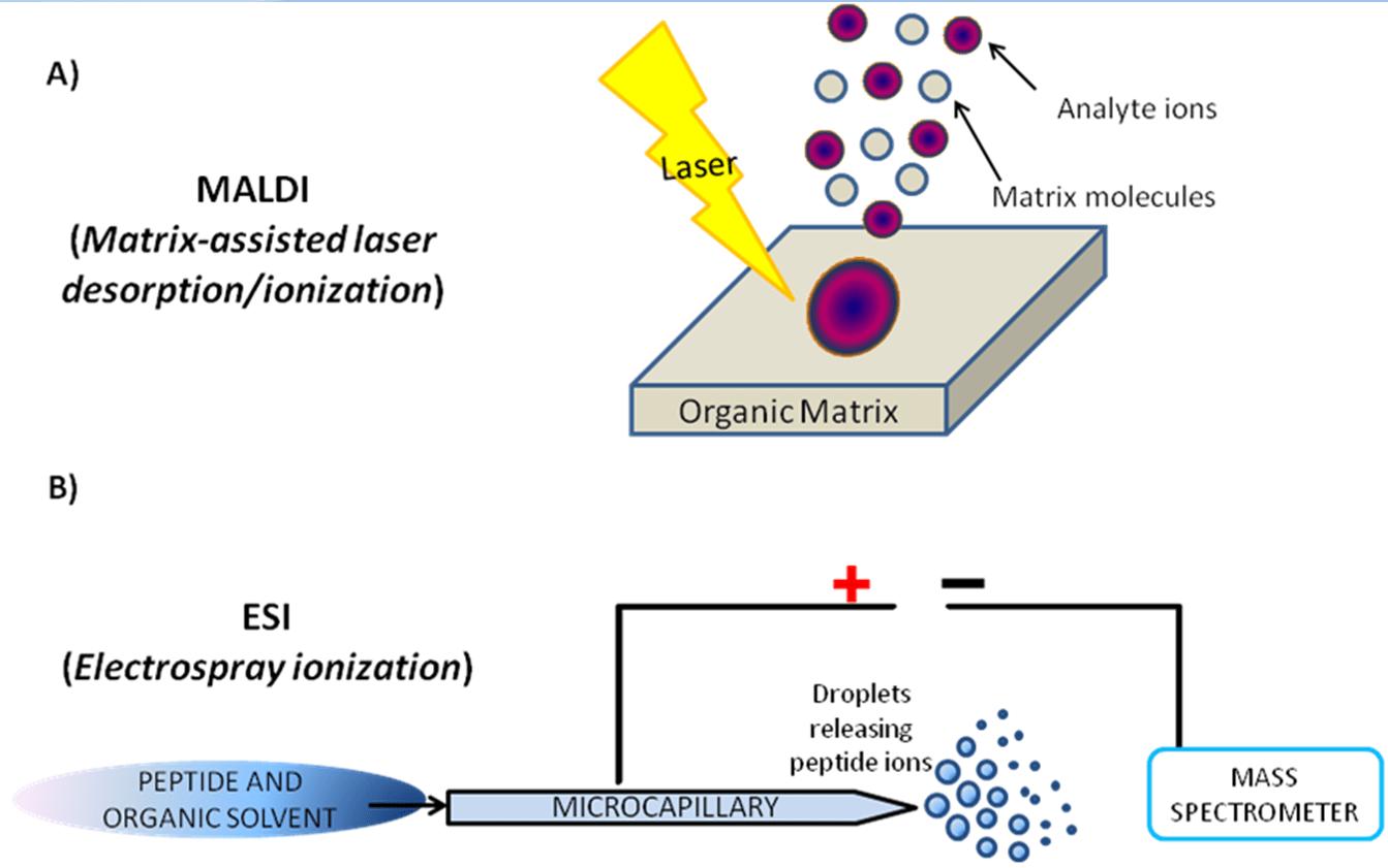 hight resolution of figure 3 schematic representation