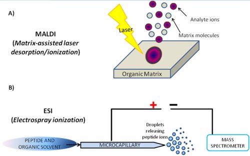small resolution of figure 3 schematic representation