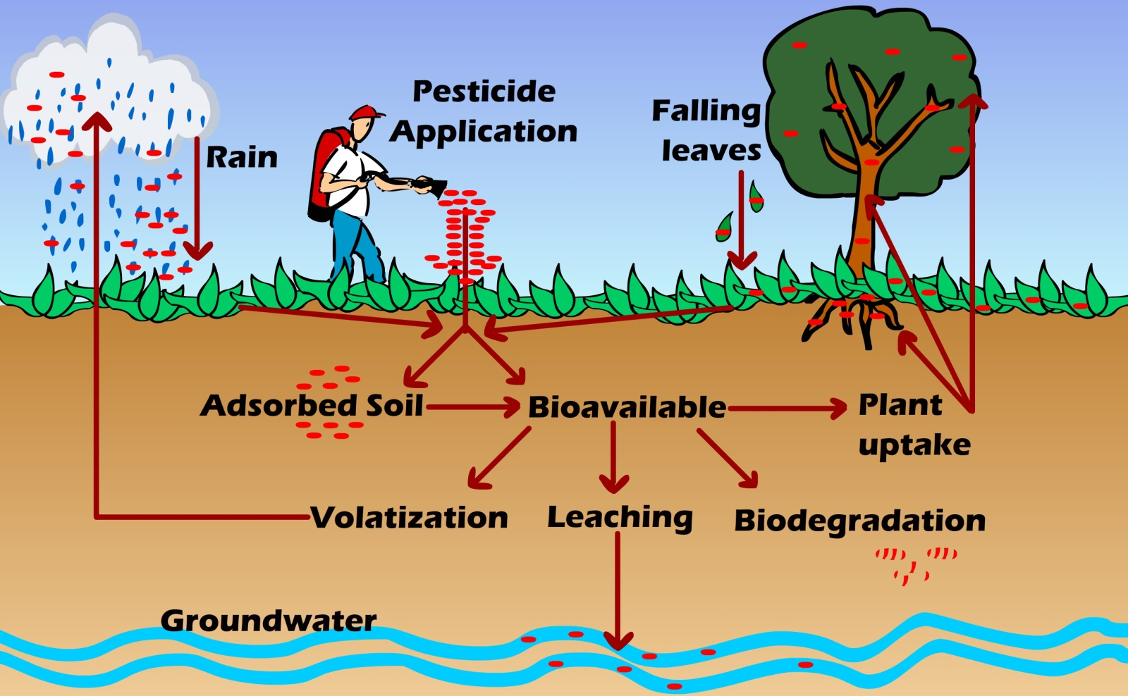 Persistence And Bioaccumulation Of Persistent Organic