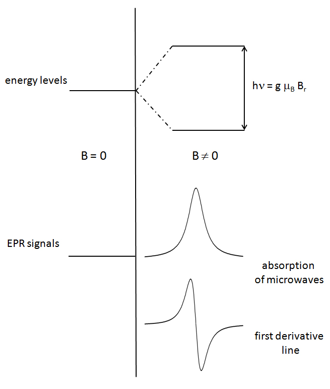 Application of Electron Paramagnetic Resonance