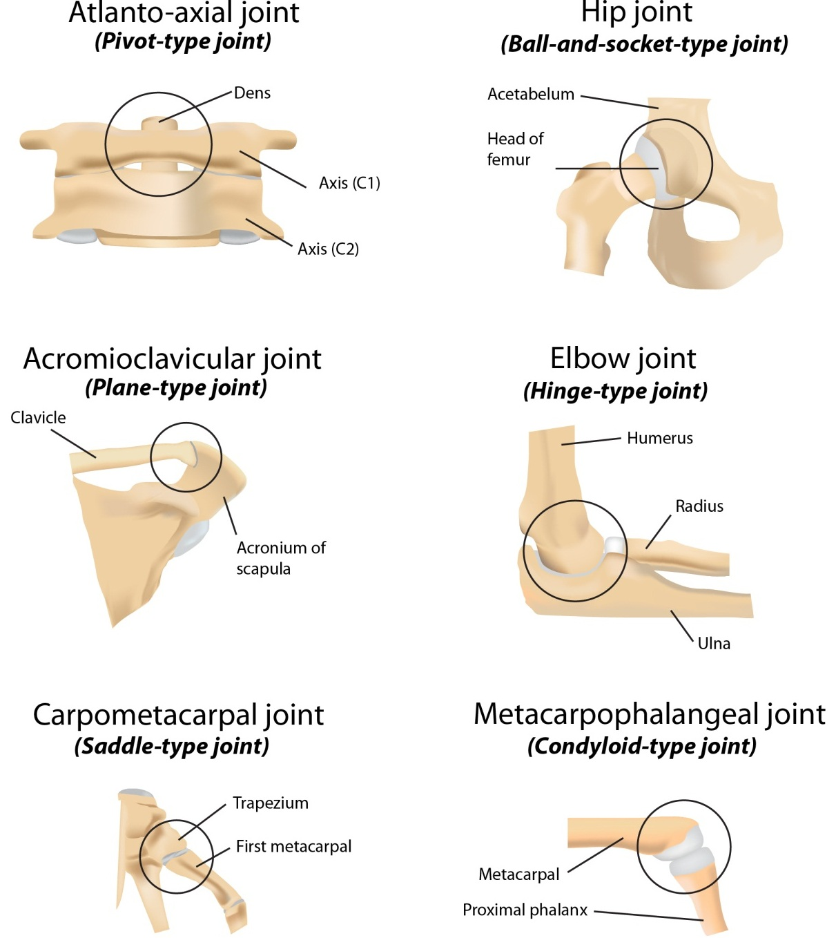Classifications And Definitions Of Normal Joints