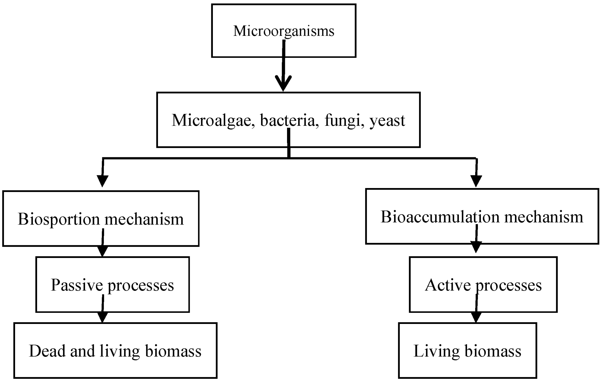 hight resolution of figure 4 microorganisms