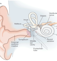 figure 2 the structure of the human ear  [ 3304 x 2746 Pixel ]