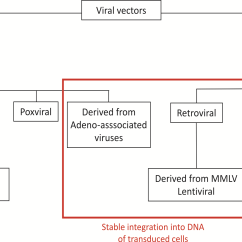 In Vivo Gene Therapy Diagram Renault Trafic Wiring Pdf Retroviral Vectors Intechopen