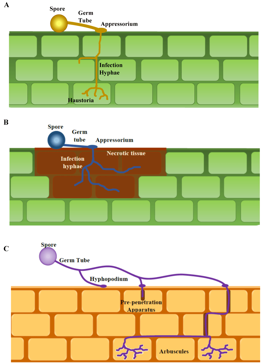 medium resolution of figure 1 generalized diagram of infection