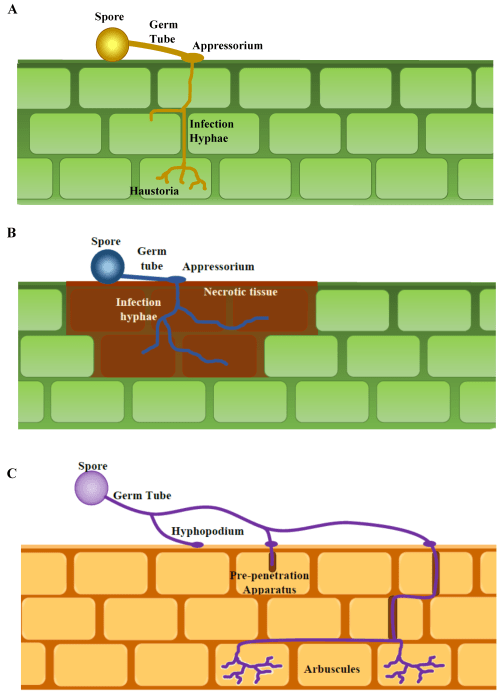 small resolution of figure 1 generalized diagram of infection