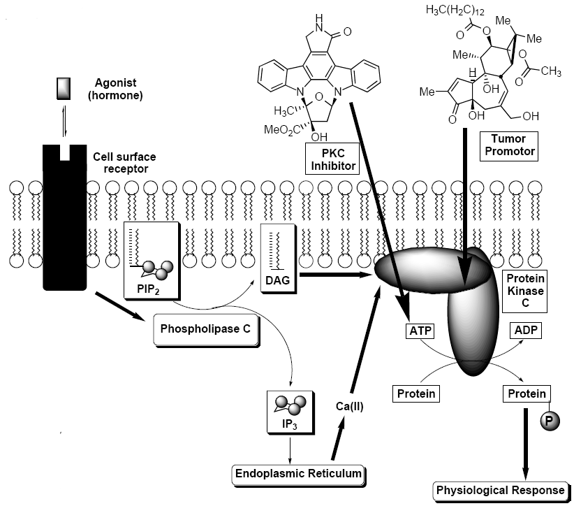 Strategies Towards the Synthesis of Staurosporine