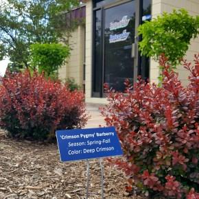 landscaper, landscape companies, landscapers in, Franklin landscaping