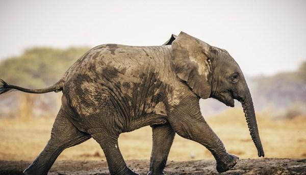 Teams assists in enabling conservation efforts