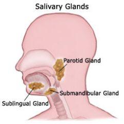 Anatomy Digestive Diagram Salivary Glands 2004 Saturn Ion Ignition Wiring What Is Sialadenitis? | Intelligent Dental