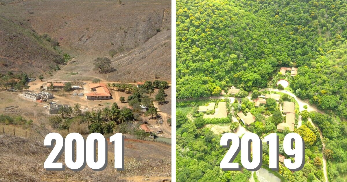 Couple Plants 2.7 Million Trees To Restore Brazilian Forest Home To  Endangered Species