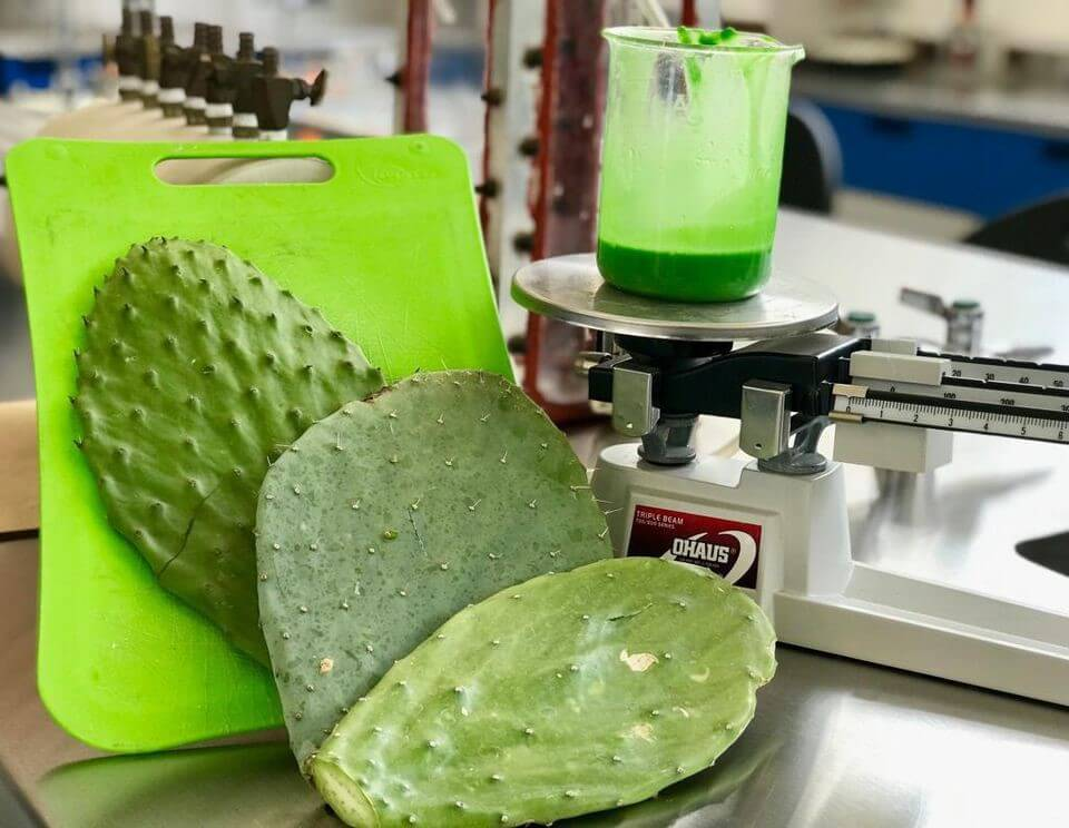 This Non-toxic Compostable Plastic Is Made From Cactus Juice