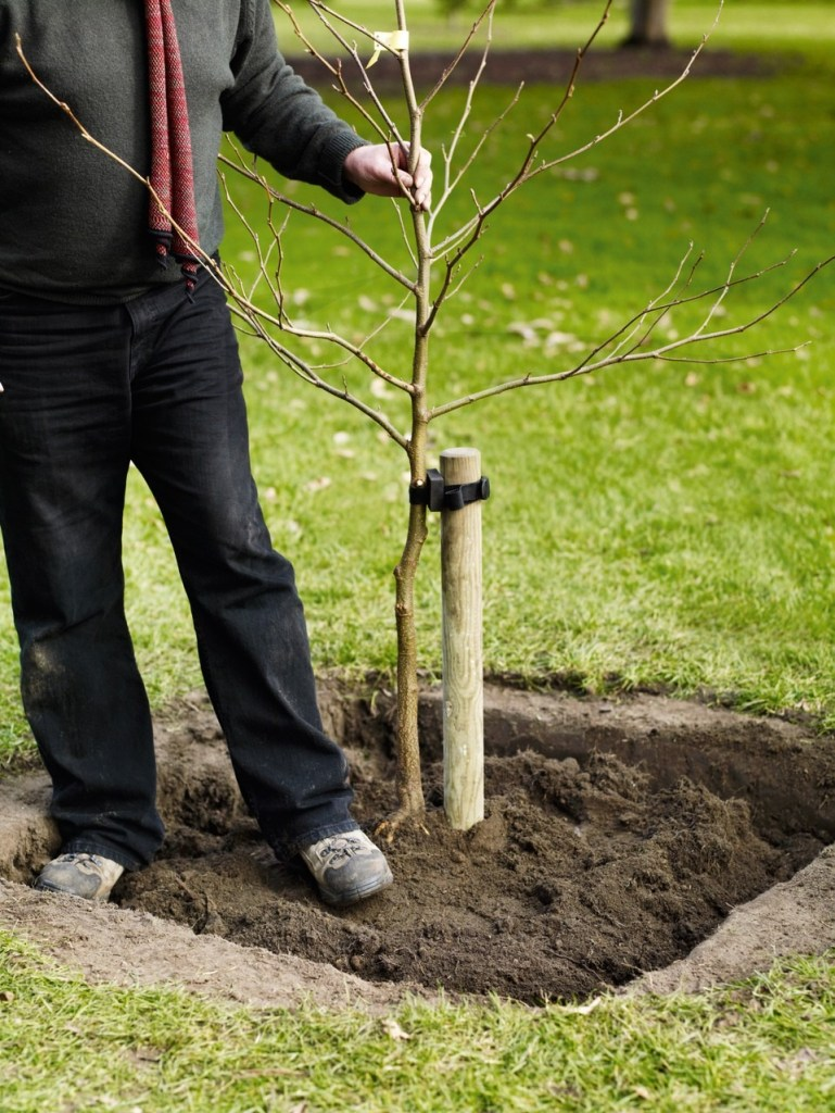 Planting Trees In Square Holes Makes Them Grow Stronger And Faster