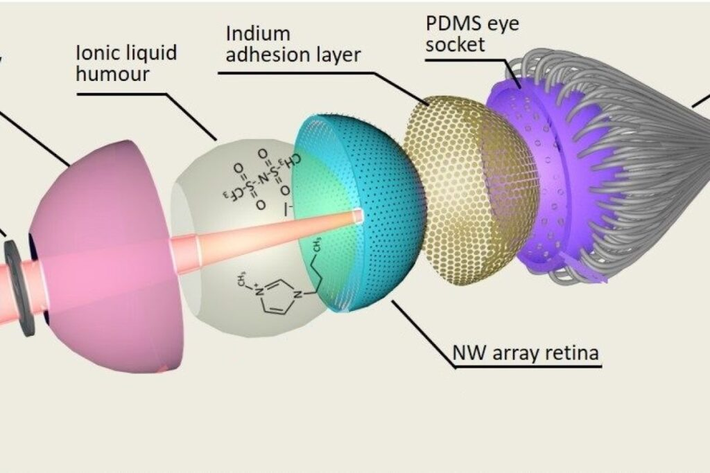 The Electrochemical Eye: An Artificial Eye For Superhuman Sight