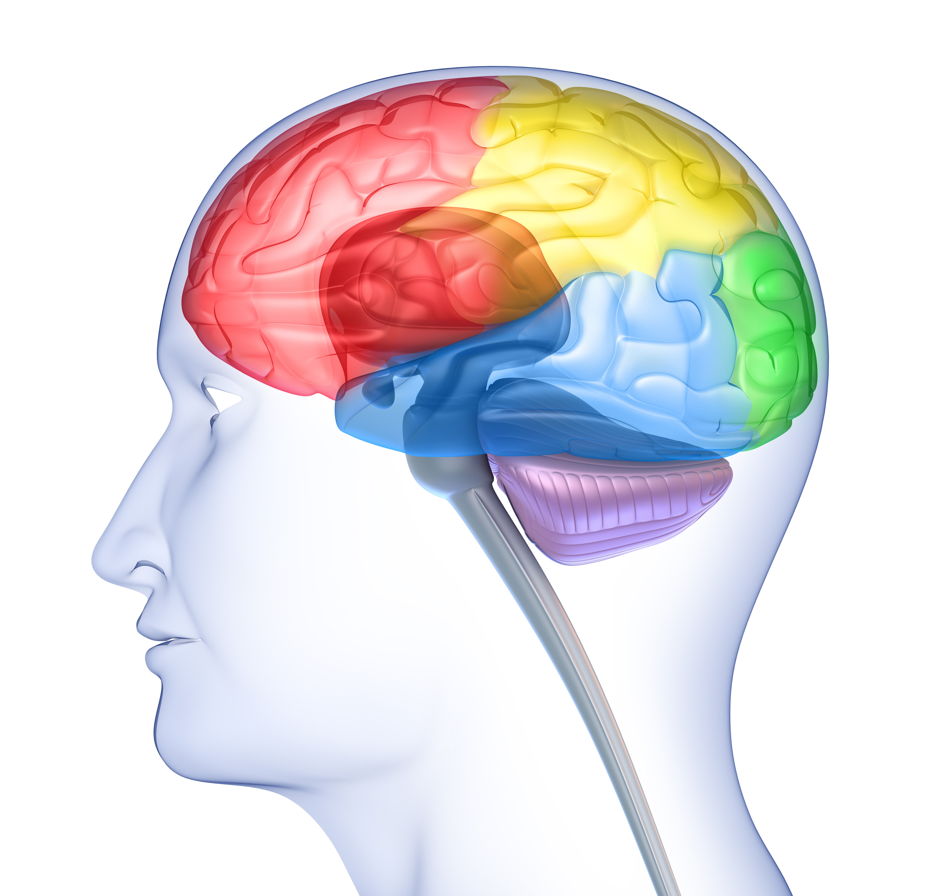 065 The Anatomy And Functions Of The Frontal Lobe