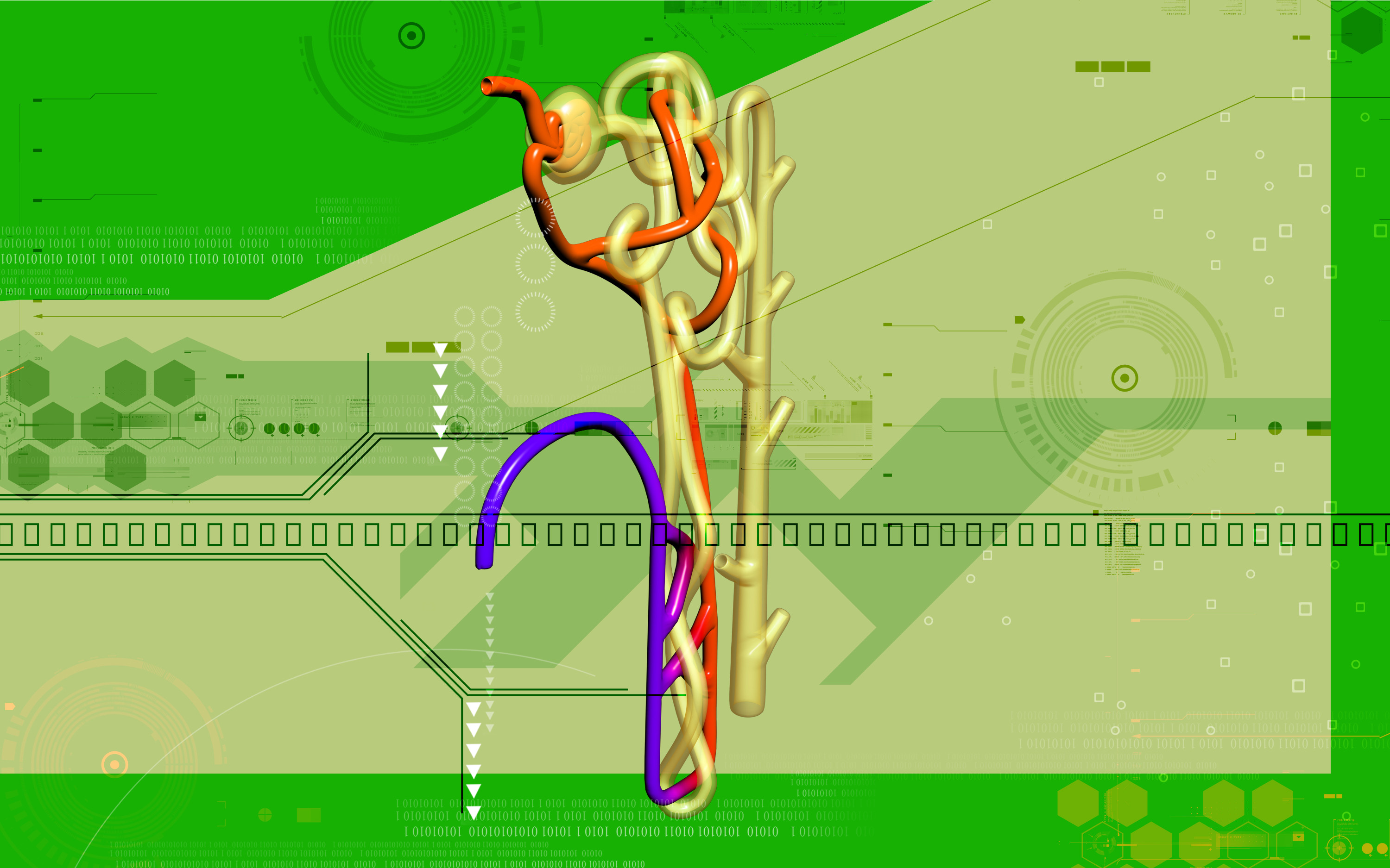 nephron diagram from a textbook 2000 jeep cherokee sport tail light wiring structure and function