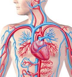 blood pressure short term and long term control measures [ 1280 x 640 Pixel ]