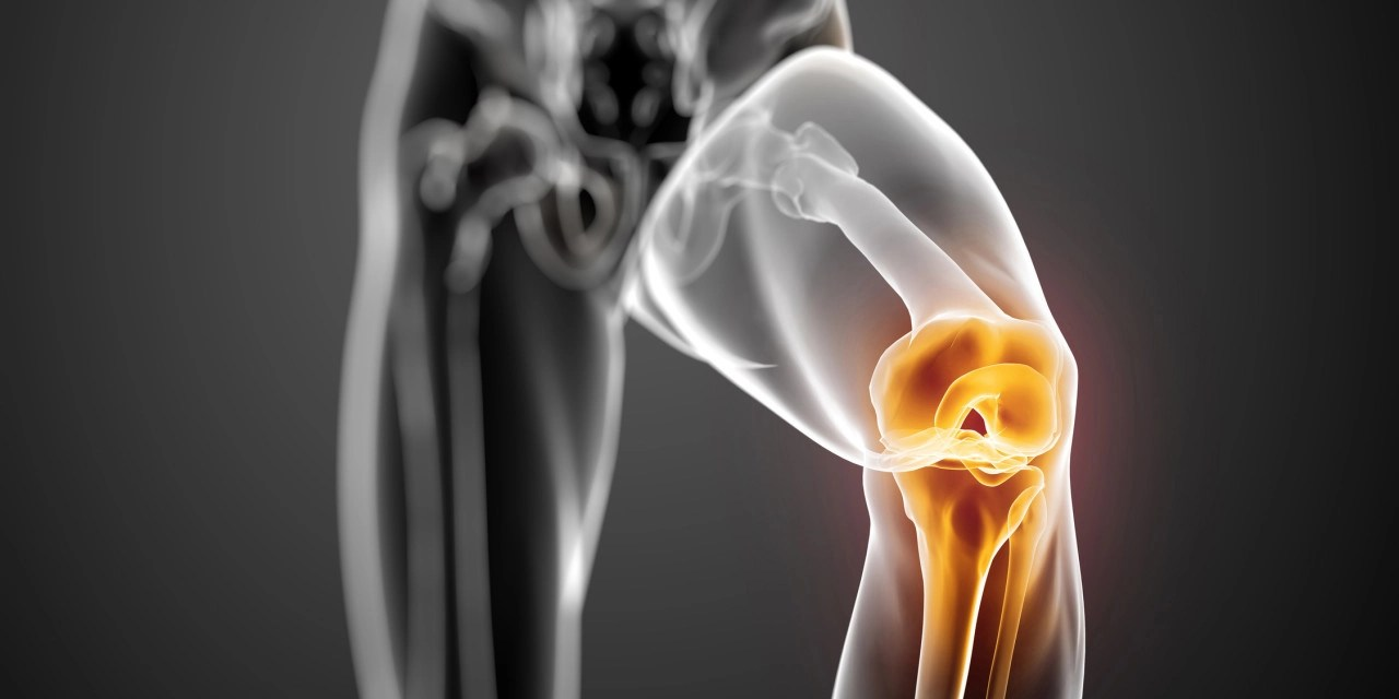 hight resolution of functional anatomy of the knee movement and stability