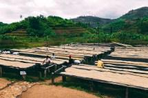 Rwanda Muraho Natural Interamerican Coffee