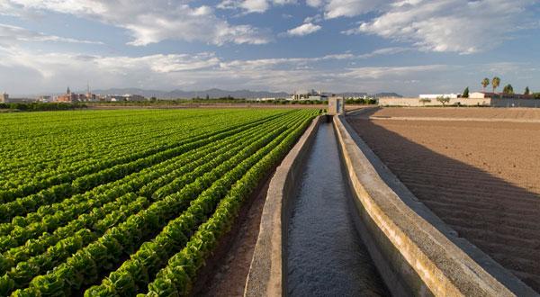 La Conselleria de Agricultura autoriza el pago de más de 109,5 millones de euros de ayudas de la PAC