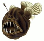 250px-Humpback_anglerfish
