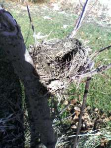 robin nest January 21