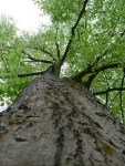 5 Interesting Facts About Trees