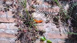 Perdi uma borboleta no muro