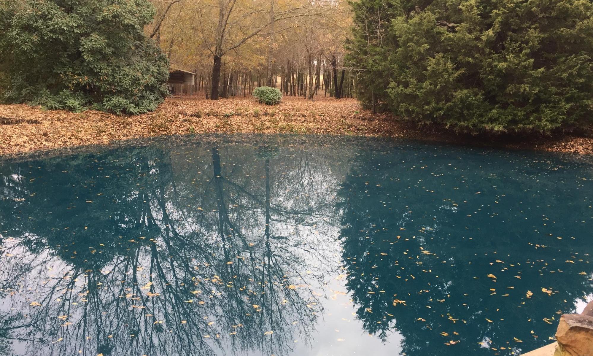 Peaceful Meditative Pool
