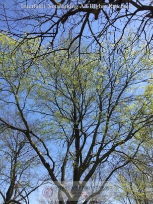 IF-Texture-Tree-Sky-IMG_5583