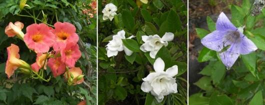 庭に咲いていた花