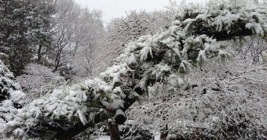 墨絵のような雪景色