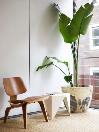 Een grote plant in je interieur