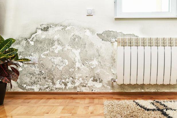 remove_mold_mildew_home