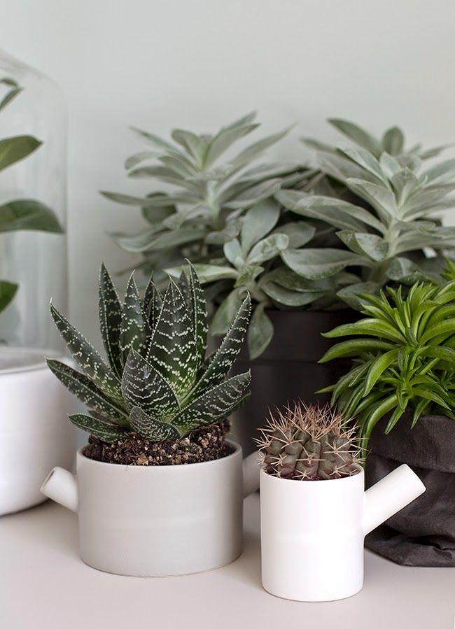Vetplanten in huis  Interieur Insider