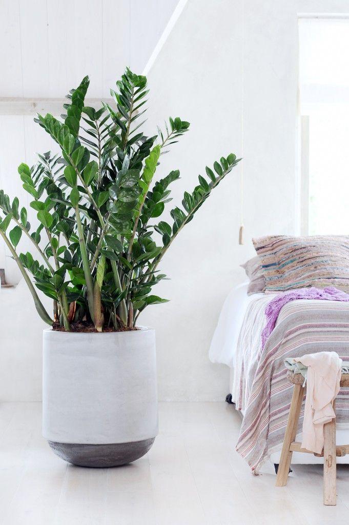 Grote kamerplanten  Interieur Insider