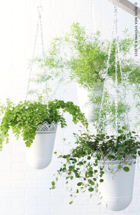Tuindecoratie hangplanten  InteriorInsidernl