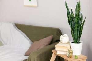 10 luchtzuiverende planten sanseviera