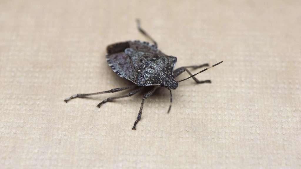 wants Insecten buiten houden, hoe doe je dat?